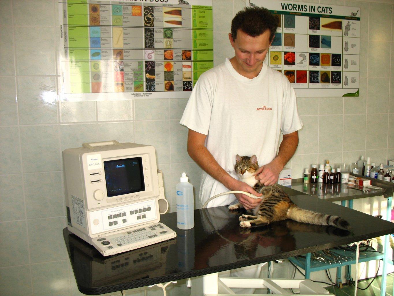 veterinar_11